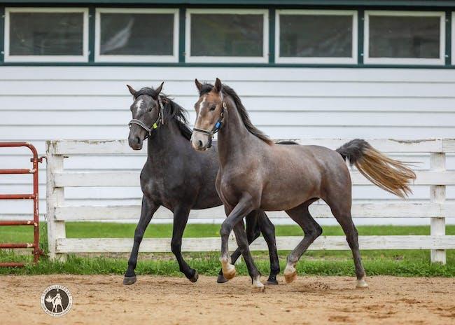 2020 Sales Horse Screening