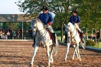 How a Lipizzan Stallion learns to dance