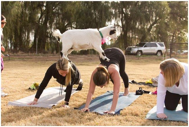 Goat Yoga & Brunch Party