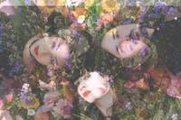 The Stargazer Lillies // Citrus Clouds