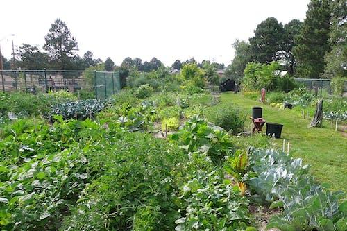 Wyoming Vegetable Gardening Workshop