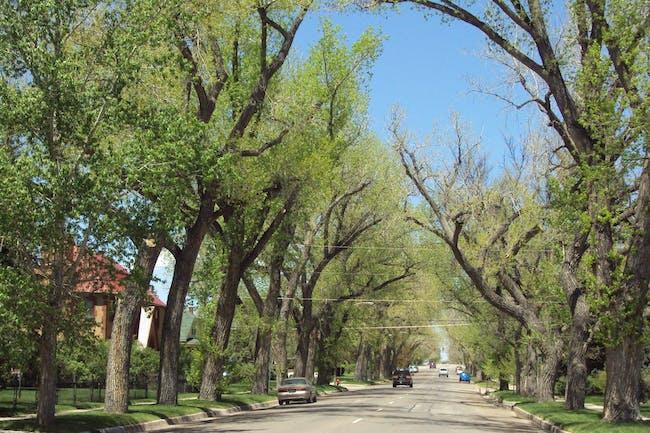 Cheyenne Tree & Garden Tour