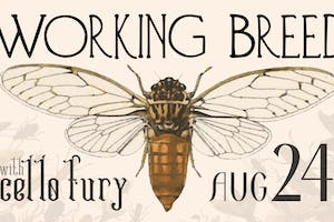 Working Breed & Cello Fury
