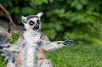 Lemur Fest 5 Hosted By BKA WATTS