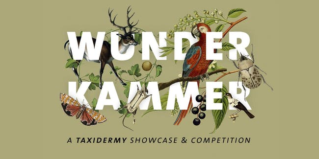 Wunderkammer: A Taxidermy Showcase and Competition
