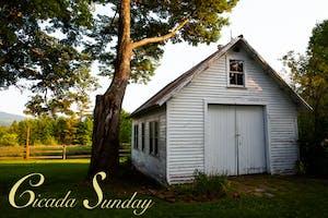 Cicada Sunday