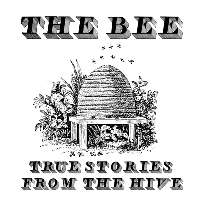 The Bee // In Transit