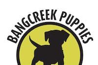 Bangcreek Puppies, O'K and The Night Crew