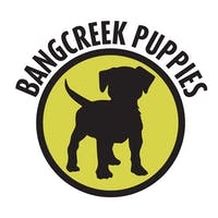 Bangcreek Puppies