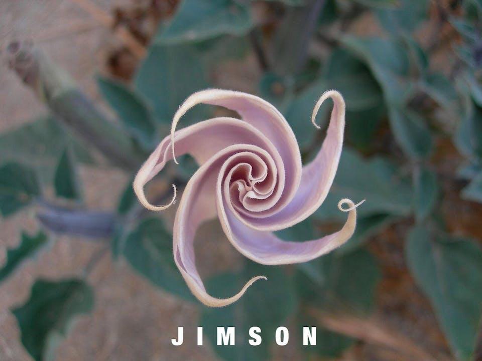 Jimson & Friends