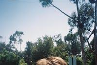 Bonnie Parker, Sunsetta, Identity Crisis, Wicked Good Dunk