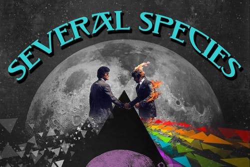 Several Species: The Pink Floyd Experience