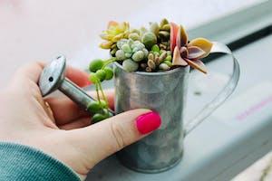 Winter Succs: Miniature Succulent Planting Workshop