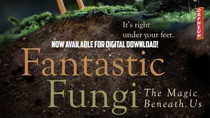 Online Viewing of Fantastic Fungi